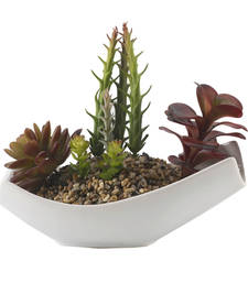 Buy Maroon  and  Green Decorative Plant with Stylish Pot housewarming-gift online