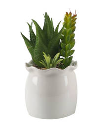 Buy Green Artificial Plant with Glossy Ceramic Pot pot online