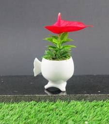 Buy MINI ANTHRIUM IN CERAMIC POT thanksgiving-gift online